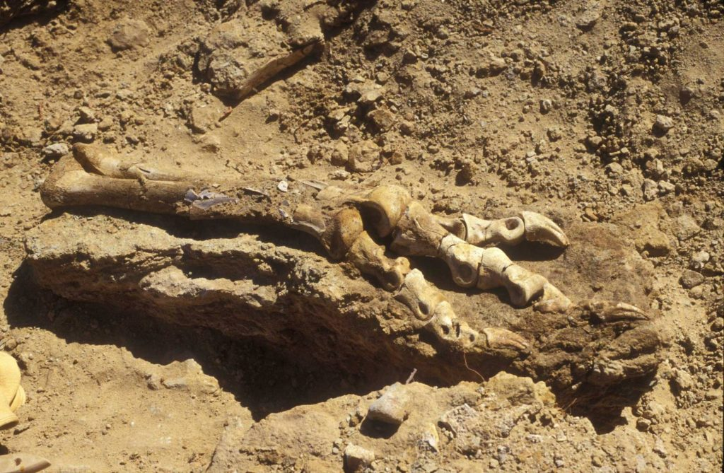 dinosaurs of Mongolia trip fossils