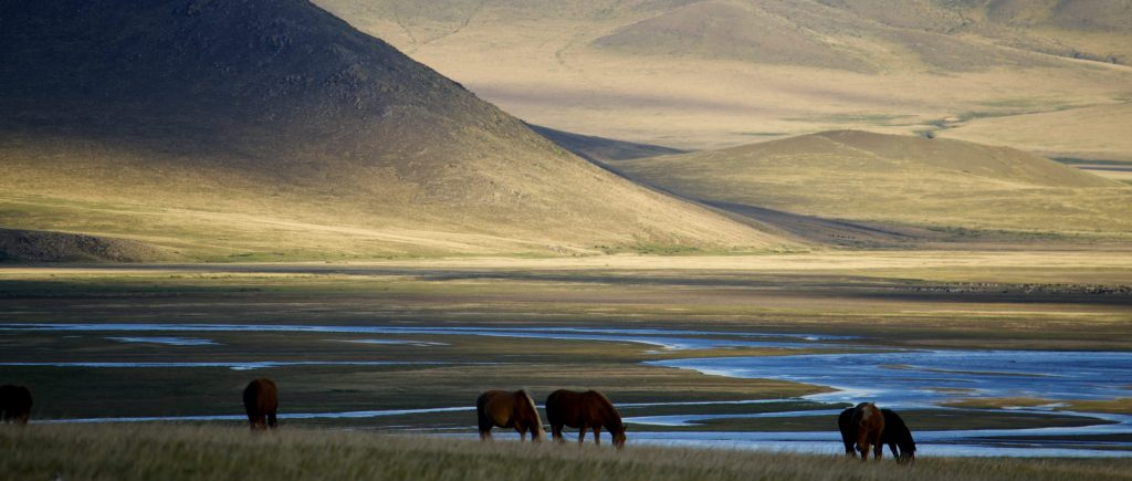 peaceful mongolian nature with horses